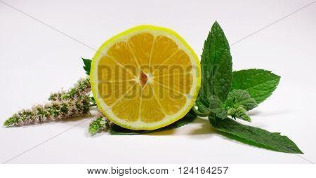 Mint Leaves And Lemon
