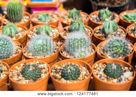The pots of cactus in the glass house