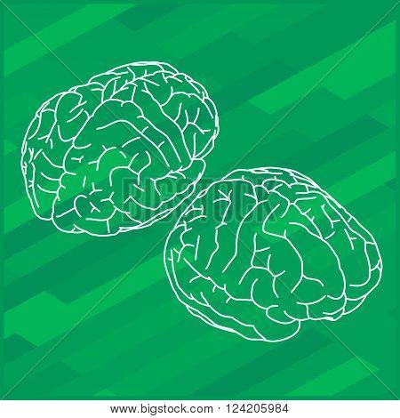 Vector outline illustration of human brain. Human brain isometric view.