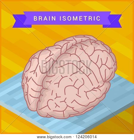 isometric view of human brain flat vector icon. Pictogram of human brain. Human ogran sign.