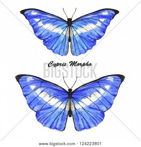 Hand drawn watercolor illustration of isolated tropical butteflies: blue Cypris Morpho