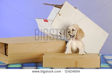 Puppy With Boxes