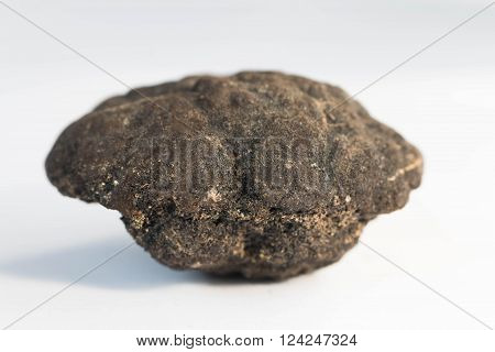 Polymetallic Nodules On White Background