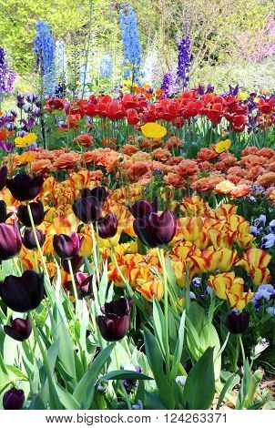 Tulips and a variety of other flowers in a flower garden