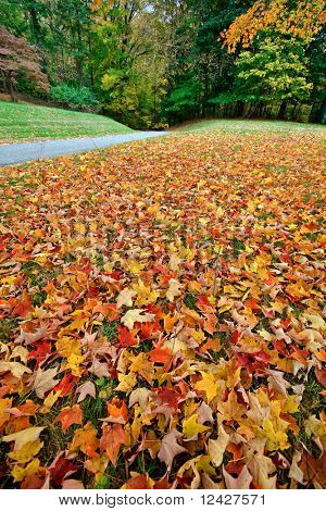 wide view of fallen autumn leaves on the grass