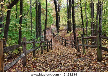 Early autumn view of forest path with fallen leaves.