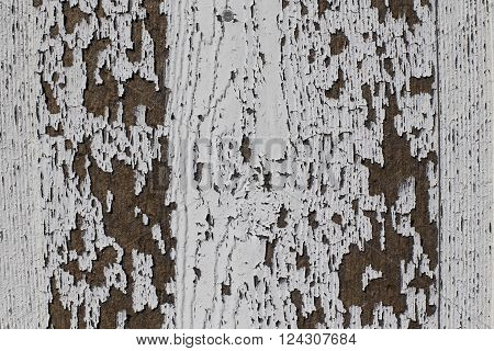 Peeling white paint on wood texture background