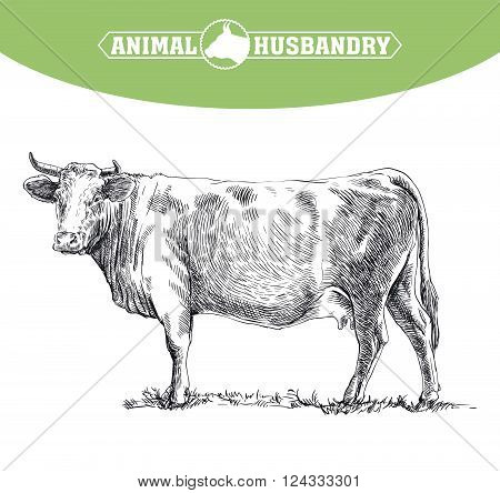 hand drawn sketches of cow on a white background