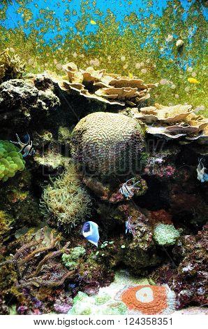 Beautiful Coral Reef and Tropical Fish in aquarium