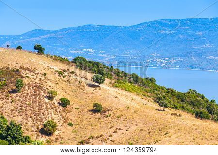 Summer coastal landscape of French mountainous island Corsica. Small trees grow on dry grass of coastal hill. Piana region France poster