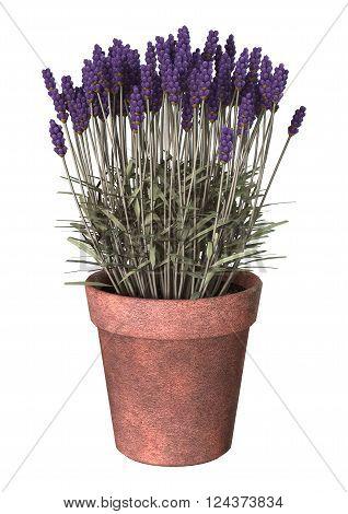 3D Illustration Lavender Pot On White