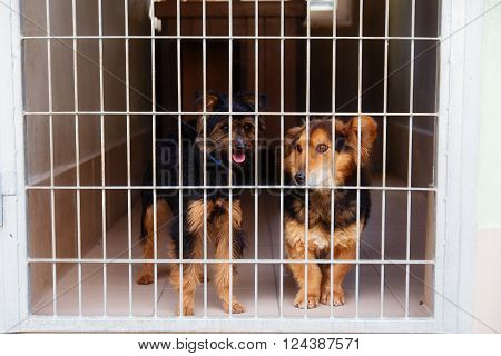 two cute strayed dogs in dog shelter poster