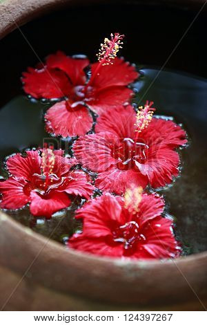 Hibiscus flower in water close up .