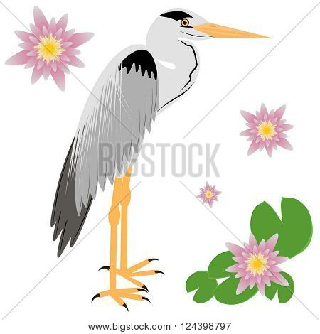 Vector Illustration of a Heron. Heron isolated on white background. Vector illustration Heron.