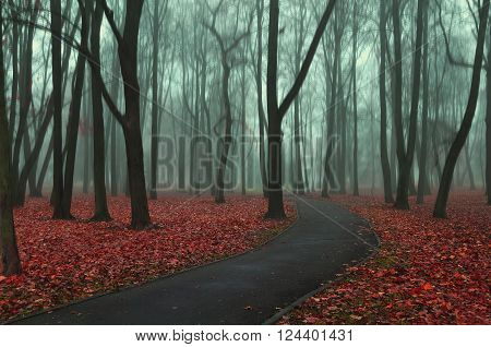 Deserted road in the autumn park in misty weather - autumnal somber landscape with bare trees and red fallen leaves on the foreground. Soft focus and creative filter processing