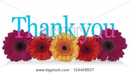 Saying Thank you with Flowers - five dahlia heads facing forwards laid in a neat row with the word 'Thank you' in turquoise blue emerging from the top in a wide banner isolated on a white background