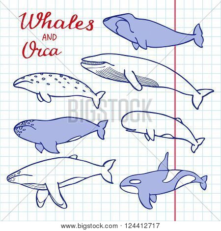 Whales and orca set. Hand-drawn cartoon collection of sea mammals - killer sperm blue humpback grey fin bowhead whales and cachalot. Doodle pen drawing on the notebook page. Vector illustration