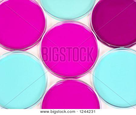 Petri Dish1