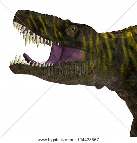 Batrachotomus Dinosaur Head 3D illustration - Batrachotomus was a carnivorous archosaur predator that lived in Germany during the Triassic Period.