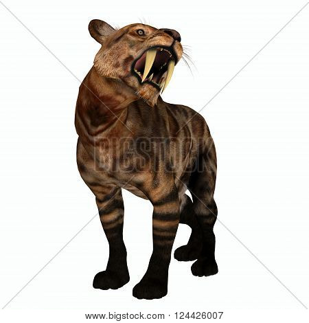 Saber-tooth Cat Growl 3D illustration - The Saber-tooth Cat also called Smilodon was a large predator that lived in the Eocene to Pleistocene Eras in North and South America.