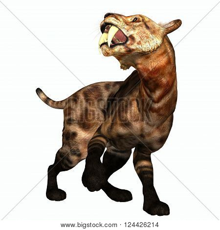 Saber-tooth Cat on White 3D illustration - The Saber-tooth Cat also called Smilodon was a large predator that lived in the Eocene to Pleistocene Eras in North and South America.