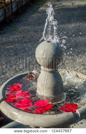 Closeup of a gushing fountain with red flower petals.