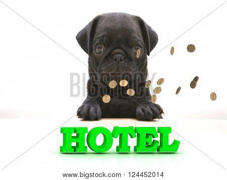 3D illustration HOTEL Bright word Blackenning dog sort pug golden coins on white background