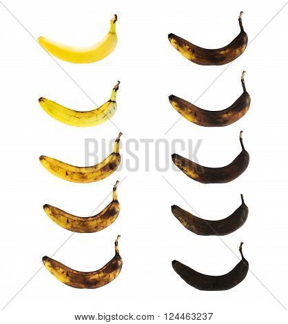 Fresh yellow spotless banana in a process of decompose rottening isolated over white background, set of ten images