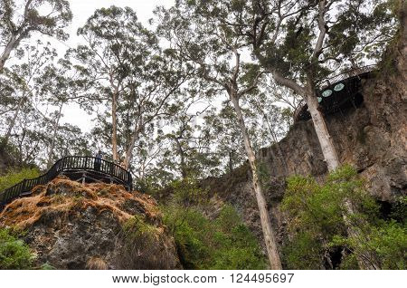 MARGARET RIVER,WA,AUSTRALIA-JANUARY 17,2016: Tourists on the viewing platform overlooking the sunken Karri tree forest with eroded limestone formations at the Lake Cave tourist attraction in Margaret River, Western Australia.