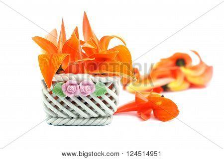 Petals of Bastard Teak Flower in ceramic basket on white background.
