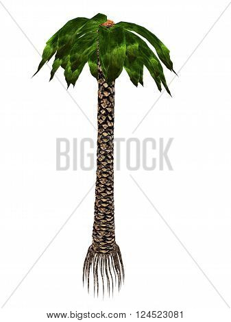 Bjuvia simplex prehistoric tree isolated in white background - 3D render