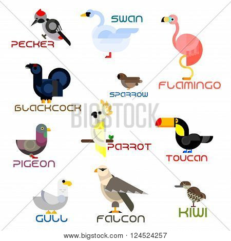 Cartoon parrot and toucan, sparrow and pigeon, forest pecker and blackcock, wild falcon and water gull, swan and flamingo, kiwi birds. Colorful flat birds for nature, zoo or childish themes design