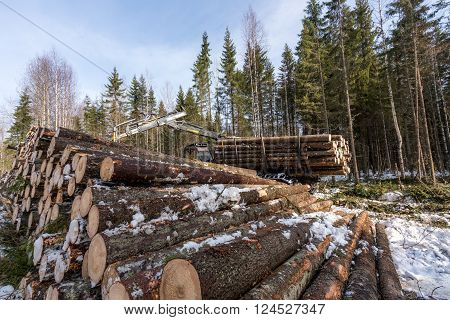 Timber harvesting. Image of logger working in winter forest