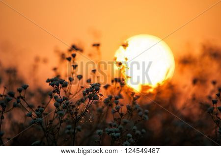 Early morning in the field. Hot summer sunrise in countryside