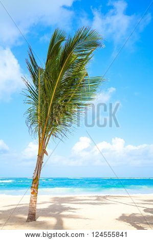 Young Palm Tree Growing On A Sandy Beach