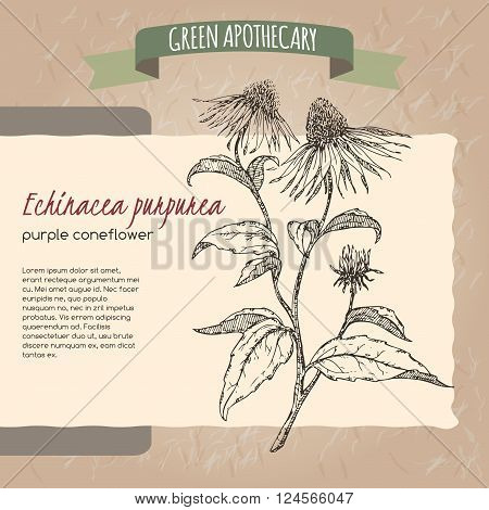 Echinacea aka purple coneflower sketch placed on original handmade paper background texture. Green apothecary series. Great for traditional or Ayurvedic medicine design.