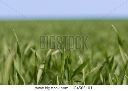 Grass Closeup, Meadow Macro,  Field Background