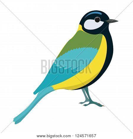 Tomtit bird vector illustration. Titmouse. Vector illustration of tomtit isolated on white background.