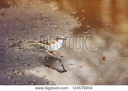 the little bird the spindle is awash in a puddle