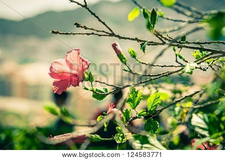 Red Hibiscus Flower On A Tree