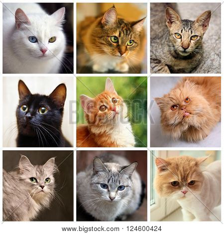 Portraits Of Cats