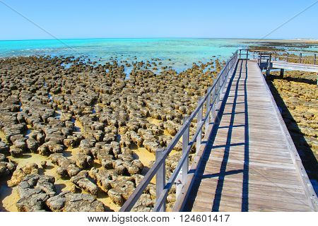 Stromatolites - Shark Bay World Heritage Area poster