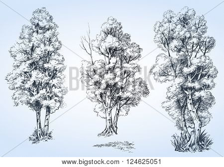 Isolated trees set, hand drawn detailed