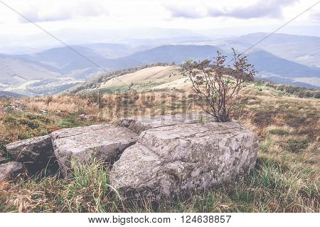 large stone and a small dry tree in the mountains the filter