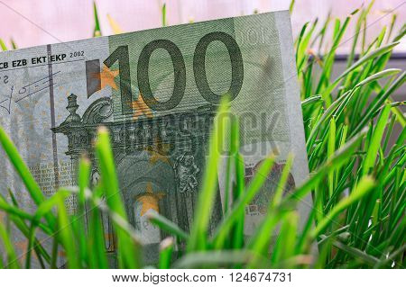 100 euro bill growing in the green grass, financial growth concept.