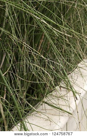 Untamed grass wildly growing over a wall