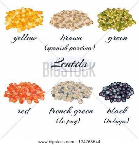 Various types of lentils (yellow, brown, green, red, french green, black lentils). Vector illustration.