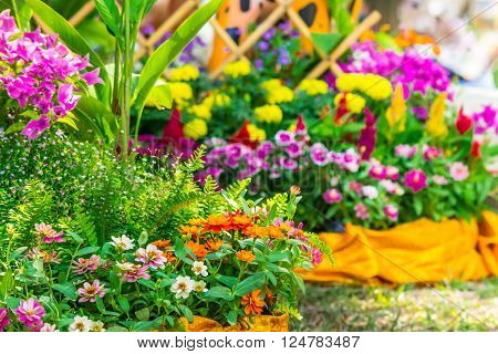 Picket fence surrounded by flowers in a front yard on summer. ** Note: Visible grain at 100%, best at smaller sizes