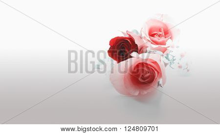 One red rose and two pink roses on isolated background in pastel tone color/Red and pink roses on isolated background