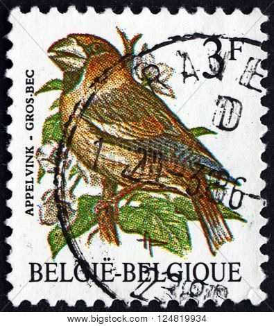 BELGIUM - CIRCA 1985: a stamp printed in the Belgium shows Evening Grosbeak Hesperiphona Vespertina small Passerine Bird circa 1985